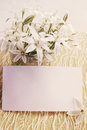 Flowers with a card white delicate spring on white board Royalty Free Stock Photos