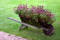 Flowers cart Royalty Free Stock Photo