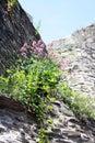 Flowers on a castle wall Stock Photos