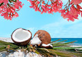 Flowers and coconuts pink oleanders by the shore Royalty Free Stock Photo