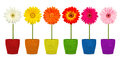 Flowers in coloful pots colorful row of gerbera Royalty Free Stock Photography