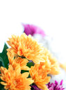 Flowers colorful macro background Royalty Free Stock Image