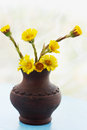 Flowers coltsfoot in ware pottery handmade Royalty Free Stock Image