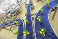 Flowers on conveyor belt,production line Royalty Free Stock Photo