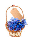 Flowers cornflower in the basket card and isolated Royalty Free Stock Images