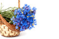 Flowers cornflower in the basket closeup isolated Stock Image