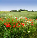 Flowers and countryside Royalty Free Stock Photo
