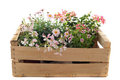 Flowers in a crate Royalty Free Stock Photo