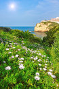 Flowers daisies grass in the garden beach against beautiful of carvoeiro portugal Stock Images