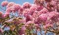 Flowers daytime pink