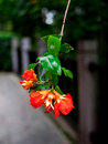 Flowers decorate our fields streets life make our world more colorful Royalty Free Stock Image