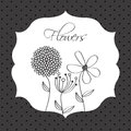Flowers design over dotted background vector illustration Royalty Free Stock Images