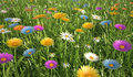 Flowers of different colors in a grass field close up view filed plenty multicolored Stock Photo