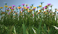 Flowers of different colors in a grass field close up view filed plenty multicolored viewed from side with close Stock Photos
