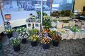 Flowers displayed at a market in beek en donk the netherlands Stock Photography