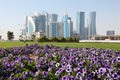 Flowers in Doha downtown, Qatar Stock Image