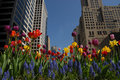 Downtown with flowers Royalty Free Stock Photo