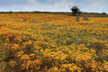Flowers On The Dunes On The We...