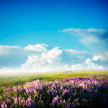 Flowers field Royalty Free Stock Photography
