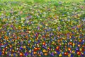 Flowers field Impressionism Oil painting.