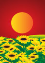 Flowers field of sunflowers and the moon on a red background Royalty Free Stock Images