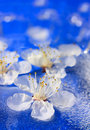 Flowers floating in water Royalty Free Stock Photo