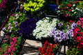 Flowers on a florist colorful and lively in front of local Royalty Free Stock Photos