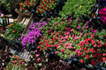 Flowers on a florist colorful and lively in front of local Royalty Free Stock Images