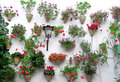 Flowers in flowerpot on the walls on streets of Cordoba, Spain. Royalty Free Stock Photo