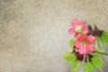Flowers of four leaf clover