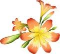 Flores ()