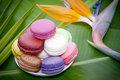Flowers and French Macaroons Royalty Free Stock Photography
