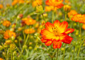 Flowers in the garden closeup orange bloom outdoor Royalty Free Stock Photo