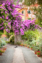 Flowers in garden in italy and cats Royalty Free Stock Images