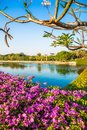 Flowers in the garden and lake on blue sky Royalty Free Stock Photo