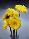 Kvety z sedmokráska