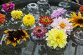 Flowers in Glass Bowls Floating in Water Royalty Free Stock Photo