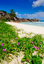 Flowers on grande Anse beach in the seychelles Royalty Free Stock Photos