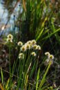 Flowers Of Grass In Nature