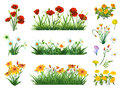 Flowers and grass set Royalty Free Stock Photo