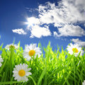 Flowers with grassy field on blue sky Royalty Free Stock Photo