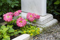 Flowers on the grave at cemetery in russia Royalty Free Stock Photo