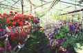 Flowers in greenhouse colorful mm film scan Royalty Free Stock Image