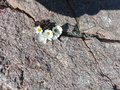 Flowers growing on rocks Royalty Free Stock Photo