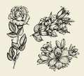 Flowers. Hand drawn sketch flower bell, rose, lily, floral pattern. Vector illustration Royalty Free Stock Photo