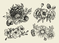 Flowers. Hand drawn sketch flower, poppy, chrysanthemum, dahlia. Vector illustration Royalty Free Stock Photo
