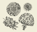 Flowers. Hand drawn sketch flower, rose, peony, lotus, orchid, bouquet. Vector illustration