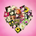 Flowers heart photos of in shape of on pink background Royalty Free Stock Image
