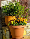 Flowers and Herbs in Pots Royalty Free Stock Photo