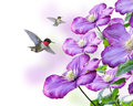 Flowers And Hummingbirds Stock Photo